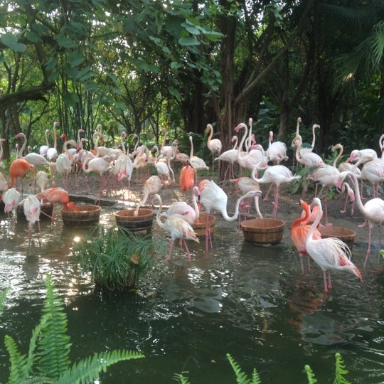 Photo taken at Xiang Jiang Safari Park, Guangzhou by Lada K. on 4/12/2012