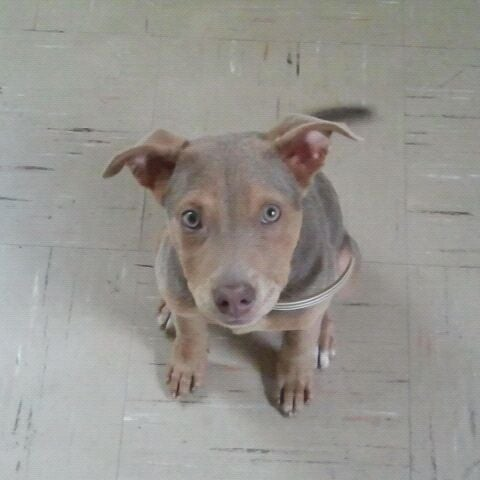 Dog Adoption Events Memphis Tn