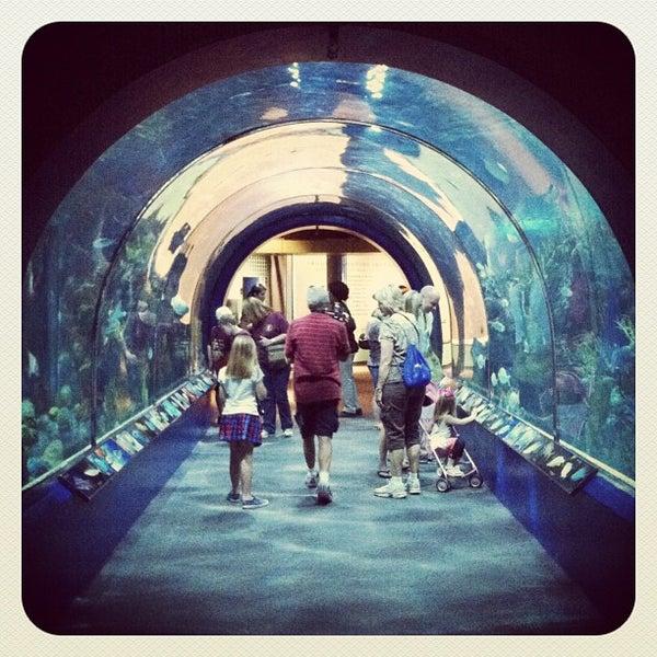 Audubon Aquarium Of The Americas French Quarter 109 Tips