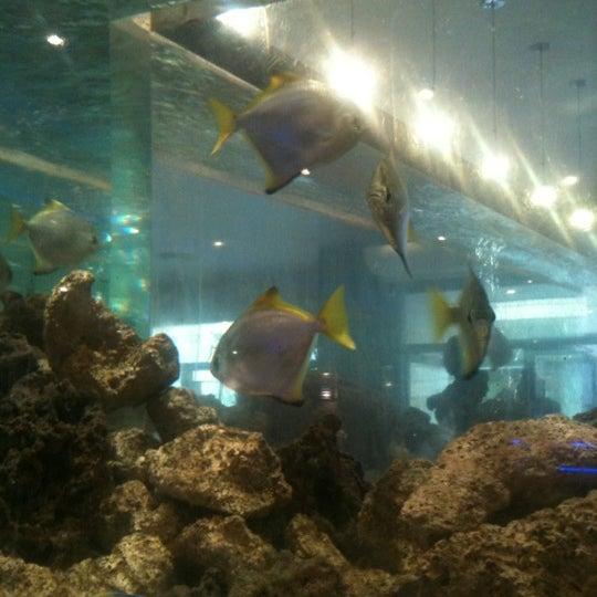 Photo taken at Cape Town Fish Market by Funkymonkey on 2/23/2012