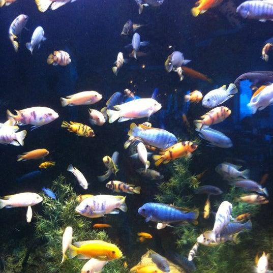 Aquarium Restaurant 11 Kemah Waterfront St