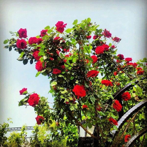 5/7/2012 tarihinde Faruk K.ziyaretçi tarafından Hacegan Restaurant'de çekilen fotoğraf