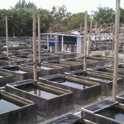 Neighborhood fish farm 9 tips from 159 visitors for Fish store miami