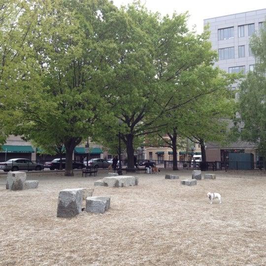 South End Boston Dog Park