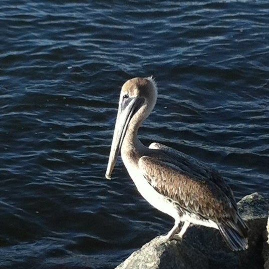 Photo taken at South Jetty / Humphris Park by Donna G. on 8/12/2012