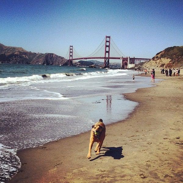 Dog Friendly Parks San Francisco