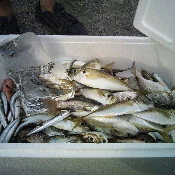 5/19/2012にYukinobu A.が金沢八景 忠彦丸 釣船・釣宿で撮った写真