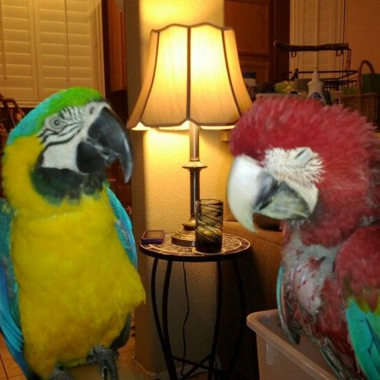 Photo taken at Aloha Animal Hospital by Noel B. on 8/17/2012