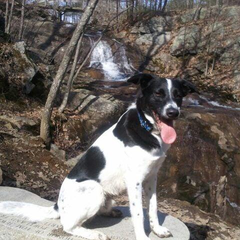 Photo taken at Jewell Falls by gooddogz on 3/12/2012