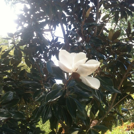 Photo taken at Garfield Park Conservatory by Jo Ann F. on 9/8/2012