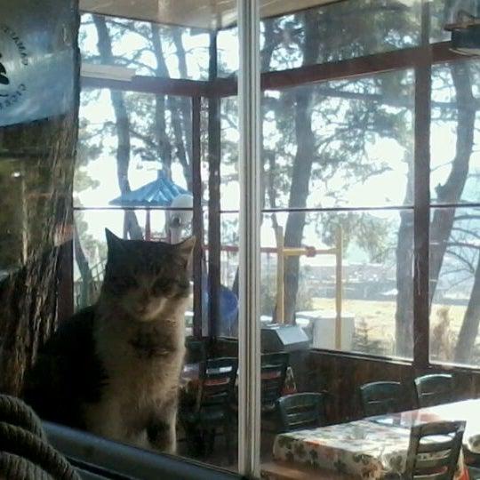 2/11/2012 tarihinde Ece M.ziyaretçi tarafından Çamaltı Restaurant'de çekilen fotoğraf