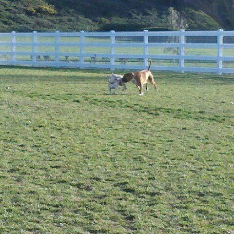 Redhawk Dog Park