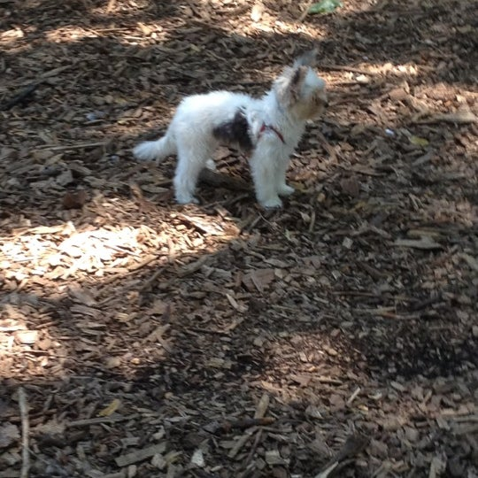 Photo taken at Marcus Garvey Park - Dog Run by Foladé on 7/8/2012
