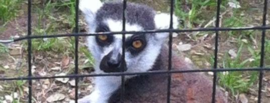 Austin Zoo & Animal Sanctuary is one of Austin To-Do.