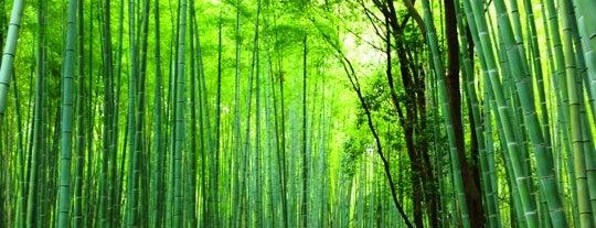 Arashiyama Bamboo Grove is one of Japan Holiday 2017.