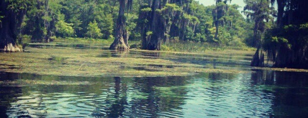 Wakulla Springs State Park is one of Get out and enjoy the fresh air in Tallahassee.