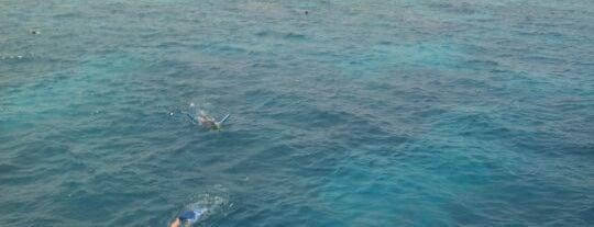 Great Barrier Reef is one of Bucket List.