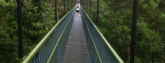 HSBC TreeTop Walk is one of Trek Across Singapore.