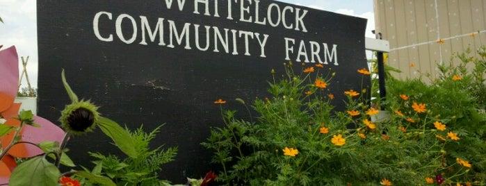 Whitelock Community Garden is one of Random.