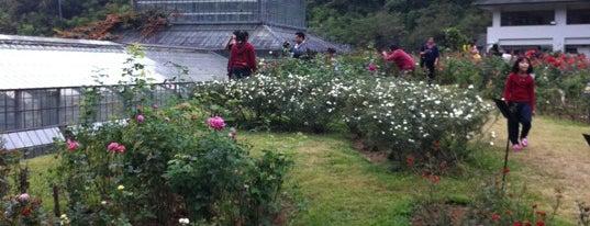 Queen Sirikit Botanic Garden is one of Guide to the best spots Chiang Mai|เที่ยวเชียงใหม่.