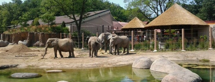 African Elephant Crossing is one of The 15 Best Places with Scenic Views in Cleveland.