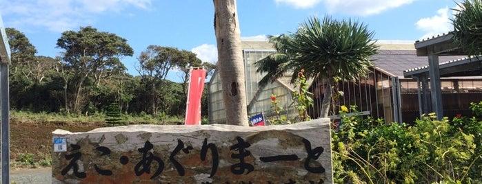 えこ・あぐりまーと(中ノ郷地熱温室) is one of Hachjojima.