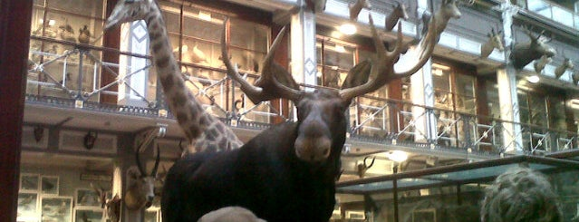 The National Museum of Ireland - Natural History is one of Dublin 2012.