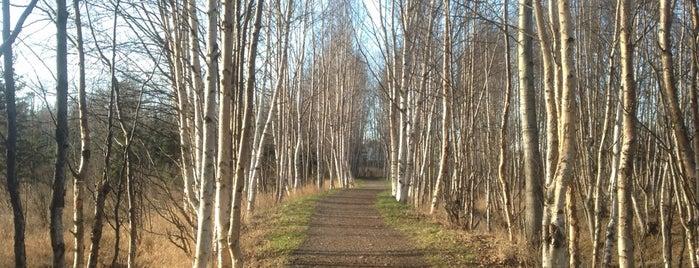 Baxter Bog Park is one of Alaska To-Do.