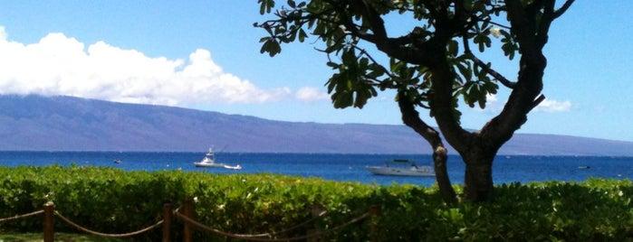 Maui, PlumeriaGirl style