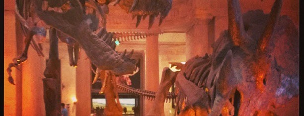 Natural History Museum of Los Angeles County is one of Museum Season - See Any of 29 Museums, Save $477+!.