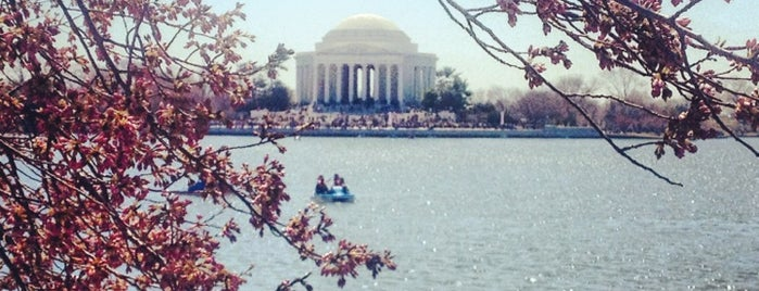 National Cherry Blossom Festival 2013 is one of DC's favorites.