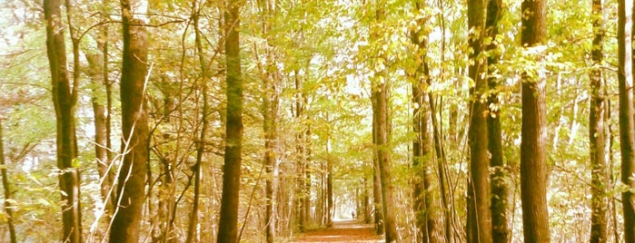 Amsterdamse Bos is one of Amsterdam <3.
