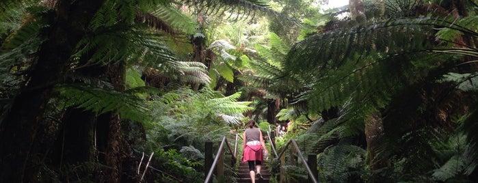 1000 Steps Kokoda Memorial Track is one of MEL.
