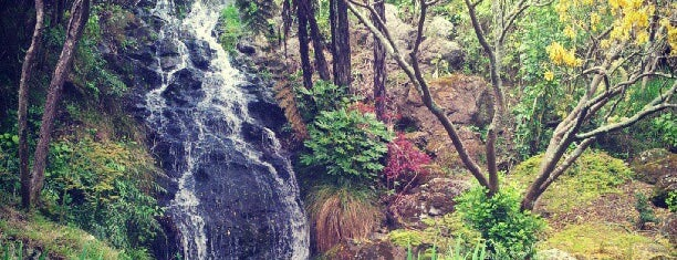 Wellington Botanic Garden is one of Places with Personality in Wellington.