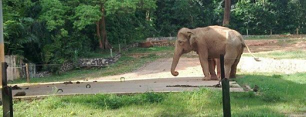 Zoo Melaka is one of Melaka.