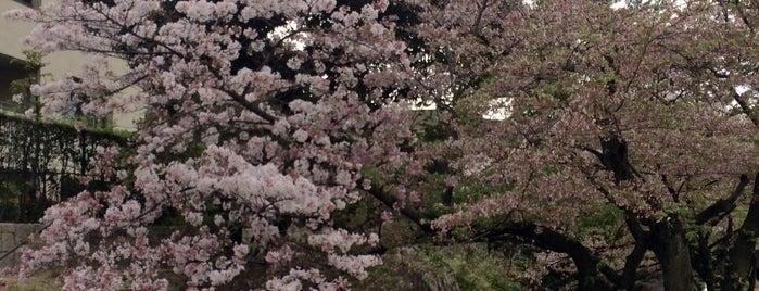 中新田川緑地 is one of 公園.