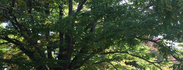 Ashbridge Park is one of Favorite places in Lower Merion and nearby places!.