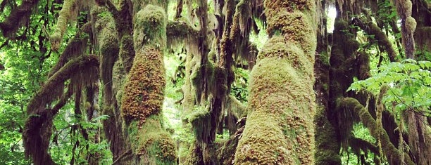 Hoh Rainforest is one of Olympic National Park 💚.