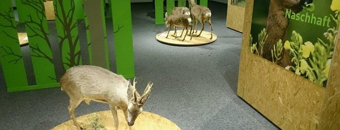 Natur-Museum is one of Gratis ins Museum.