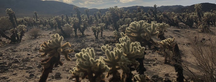 Cholla Cactus Garden is one of Psalm Sprangs.