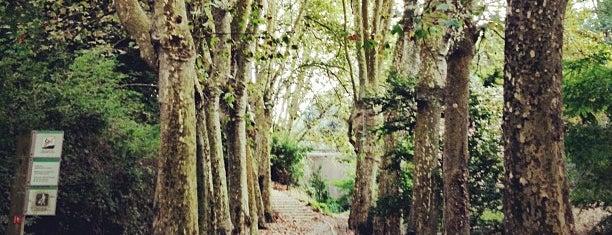 Parque Natural de Collserola is one of Dog friendly.
