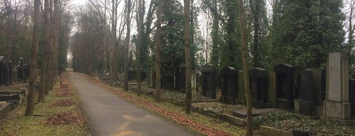 Nový židovský hřbitov | New Jewish Cemetery is one of Praha.