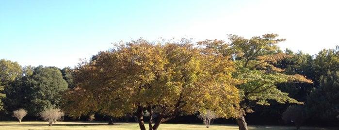 東高根森林公園 is one of 日本の都市公園100選.