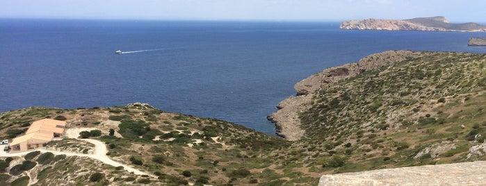 Parc Nacional Maritimoterreste de l'arxipèlag de Cabrera is one of Mallorca Birdwatching/Ornithology.