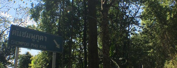 ต้นชมพูภูคา is one of ลำพูน, ลำปาง, แพร่, น่าน, อุตรดิตถ์.