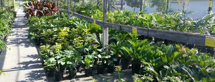 Lakewood Nursery is one of Great Orange County Garden Centers.