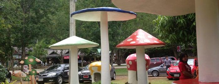 Khao Yai Panorama Farm is one of Khao Yai with Net&Mew.