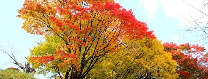 亀ヶ城公園 is one of 外遊びするなら.