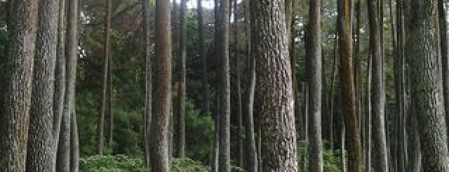 Taman Hutan Raya Ir. H. Djuanda is one of My Hometown.