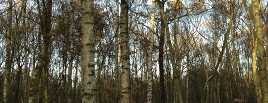 """Blean Wood is one of Wood""""Forest""""meditazione_ Kent/East SusseX."""